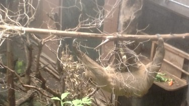 AN ACTUAL SLOTH OMG