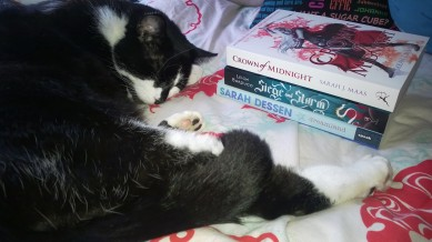 My cat Neo and my mini book haul